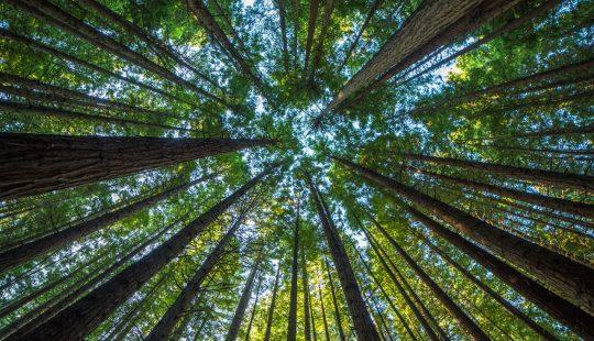 restauro ambientale